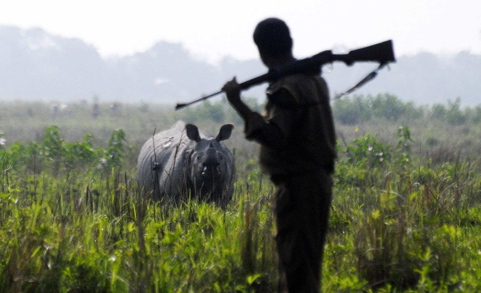 Gunshot Detection Technology has Deployed to Save Endangered Species